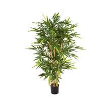 Бамбук Новый 120 см